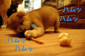 7_20081123014551.jpg