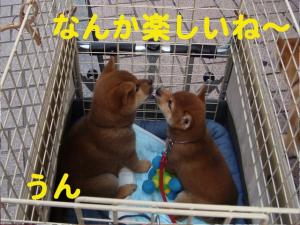 7_20081210192449.jpg