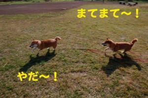 8_20081117190250.jpg