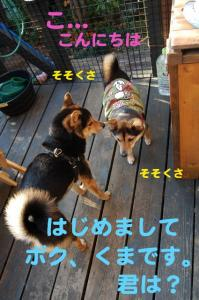 8_20081123231113.jpg