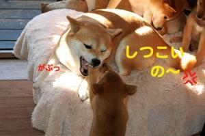 8_20081216184939.jpg