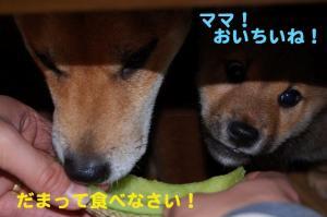 9_20081216183600.jpg