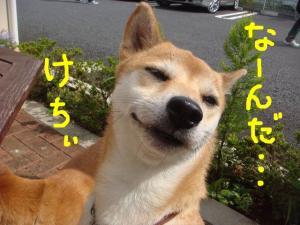 snap_shibaeko_2008100224356.jpg