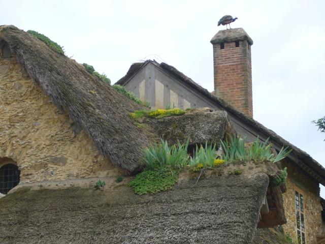 孔雀と屋根