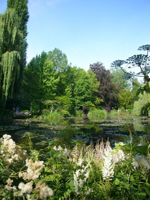 高い木々に囲まれている睡蓮の池