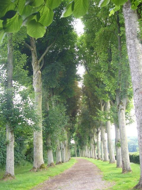 フランス ジェルブロワ並木道