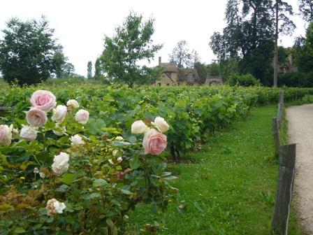 バラとブドウ畑