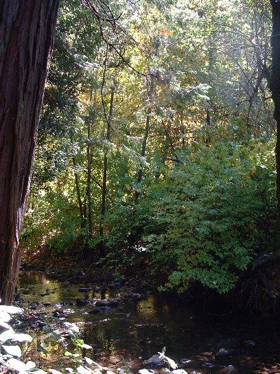 creek1015.jpg