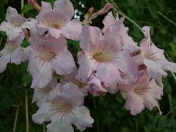 10月12日お花