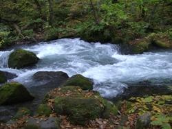 10月23日奥入瀬流れ
