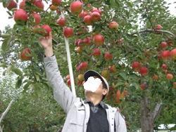 10月23日リンゴ狩りぱぱ