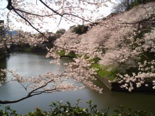 2008花見 003