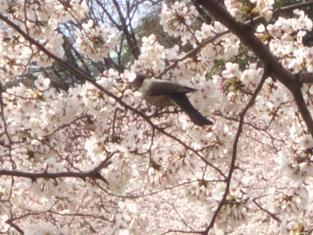 2008花見 018