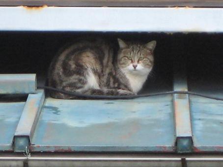 りす猫 001