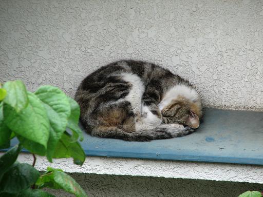 熟睡りす猫しじゅうから 006