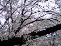 白山花見5