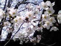 白山花見4
