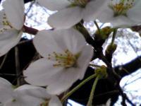 白山花見3