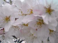 白山花見2