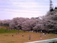白山花見1