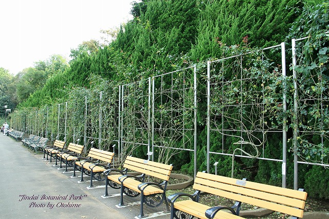 fIMG_2562神代植物公園