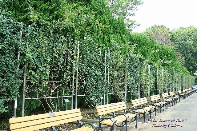 fIMG_2563神代植物公園