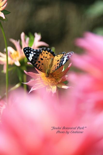fIMG_2505神代植物公園