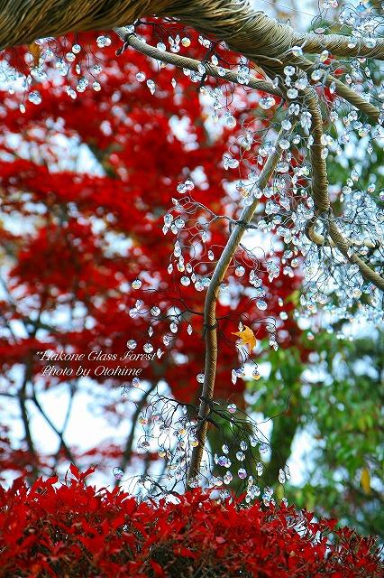fIMG_2978箱根ガラスの森