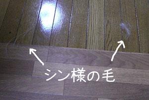 08112103.jpg