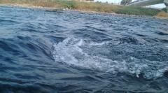 朝の川1018