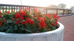 朝の花1018