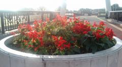 朝の花1019