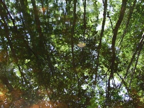 湖面に映るブナ林