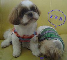 20070305shirokuro2.jpg