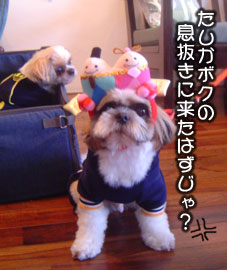 20070308mi-hinakuro.jpg