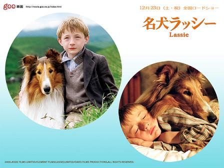 Lassie01.jpg