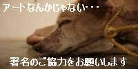 dd4.jpg