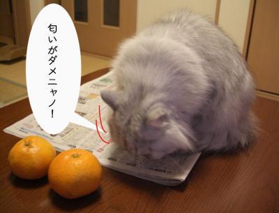 においがダメ5