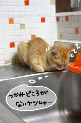 寝ちゃった(*´・ω・`*)