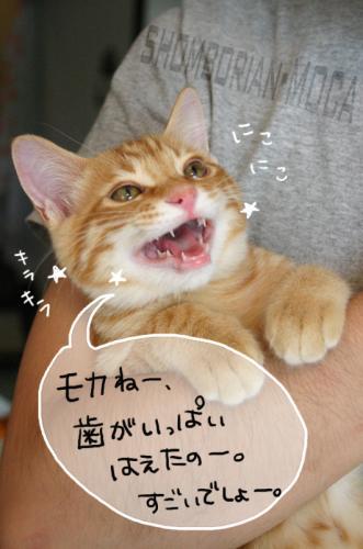 歯が命にゃん!