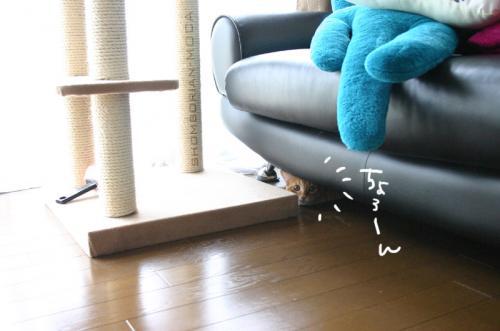 ソファーの下に・・・