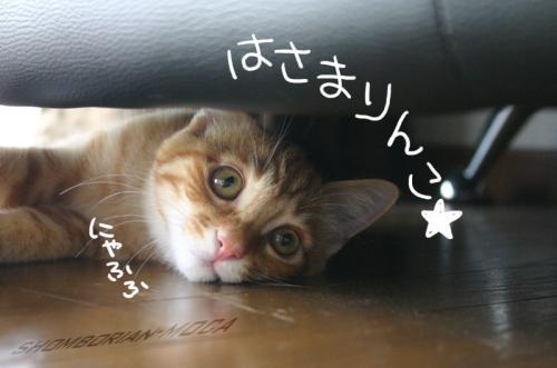 はさまりんこ☆