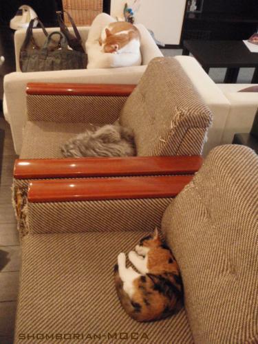 ソファーの上にも・・・・