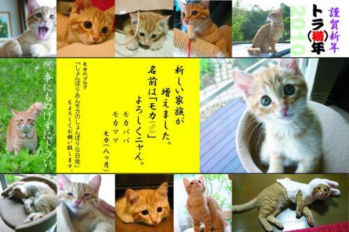 2010年賀状 寅猫年