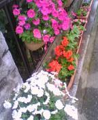gardening10.jpg