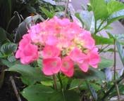 gardening7.jpg