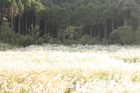 200810208+.jpg