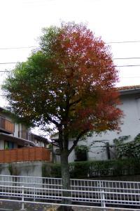 20081109風景b