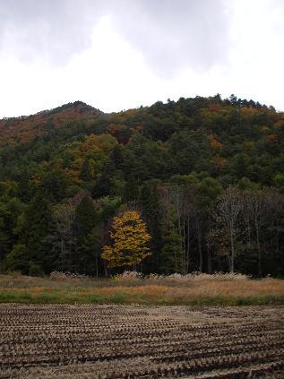 裏山の紅葉(2008年10月)