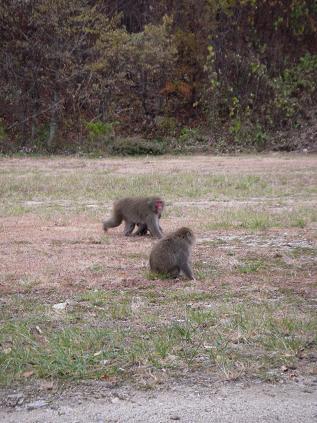猿 その2